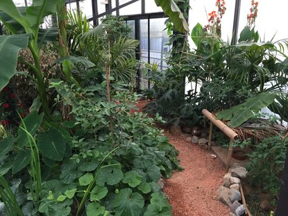 Greenhouse September 2015